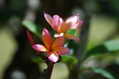 Sam Flower