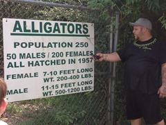 Kleibert's Adult Alligator pond